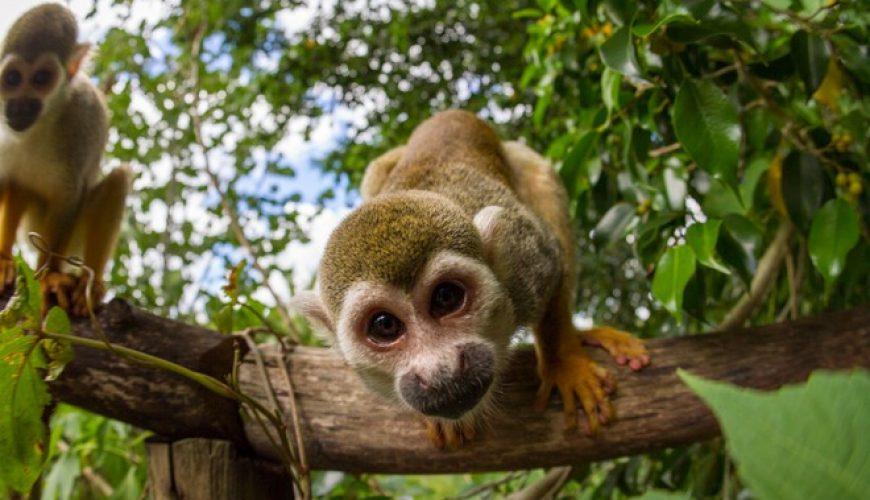 Monkey Safari Tour