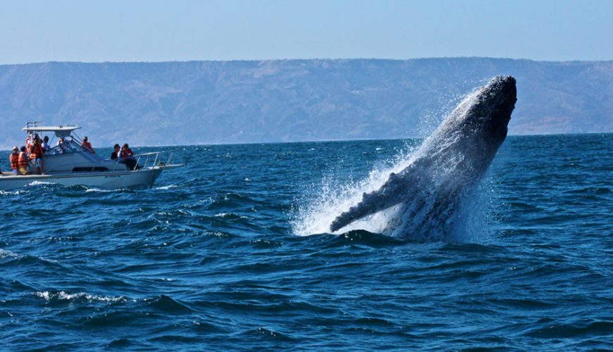 Whale Watching and Bacardi Island Tour from Punta Cana